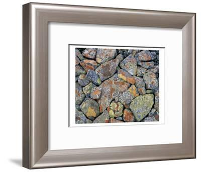Stones With Algae And Lichen--Framed Art Print