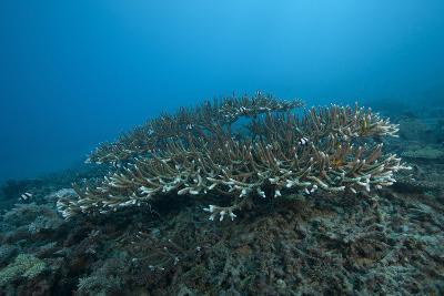 Stony Corals in Beqa Lagoon, Fiji-Stocktrek Images-Photographic Print