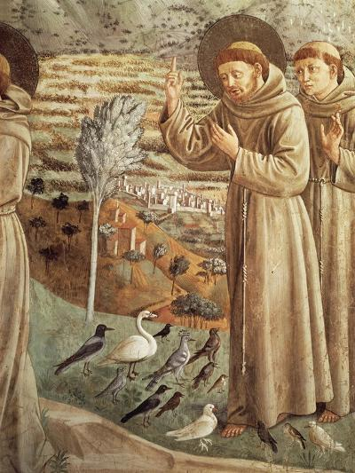Stories from Life of St Francis, Preaching to Birds--Giclee Print