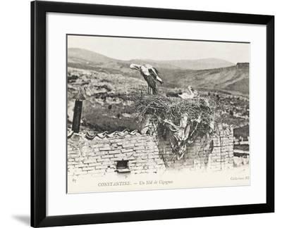 Stork Nesting on a Rooftop, Constantine, Algeria--Framed Photographic Print