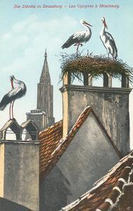 Storks in Strasbourg, France