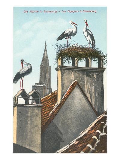 Storks in Strasbourg, France--Art Print
