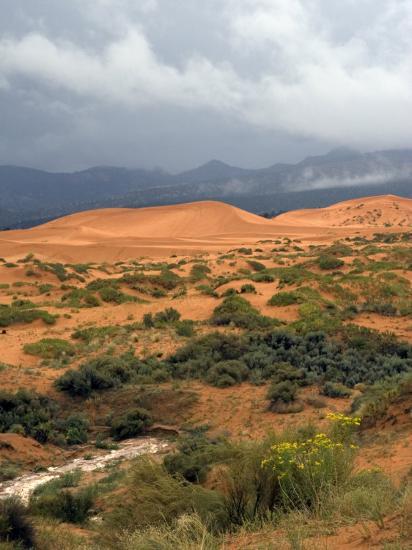 Storm at Coral Pink Sand Dunes State Park, Utah, USA-Diane Johnson-Photographic Print