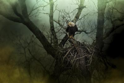 Storm at the Old Nest-Jai Johnson-Giclee Print