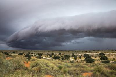 Storm Clouds Threaten the Kalahari, Kgalagadi Transfrontier Park in Summer, Northern Cape-Ann and Steve Toon-Photographic Print