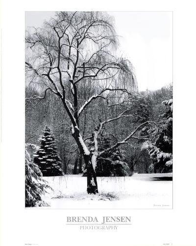 Storm's Passing-Brenda Jensen-Art Print