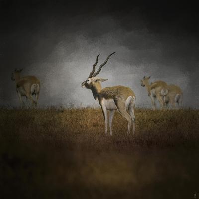 Storm Spotters-Jai Johnson-Giclee Print