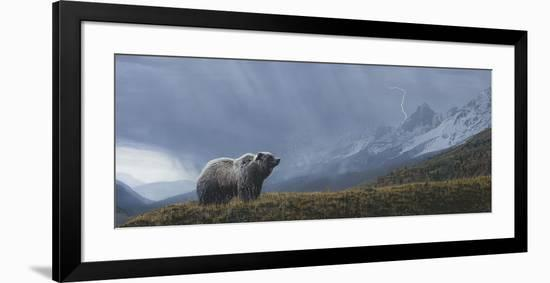 Stormwatch - Grizzly (detail)-Terry Isaac-Framed Art Print