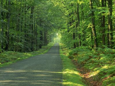 Straight Empty Rural Road Through Woodland Trees, Forest of Nevers, Burgundy, France, Europe-Michael Busselle-Photographic Print