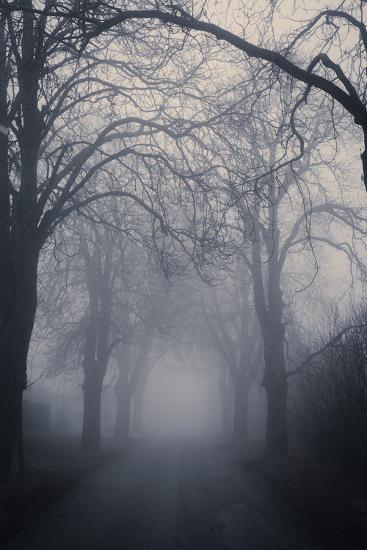 Straight Foggy Passage Surrounded by Dark Trees-vkovalcik-Photographic Print