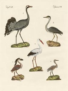 Strange Beach Birds