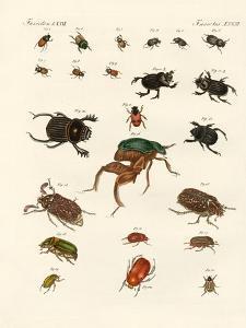 Strange Beetles