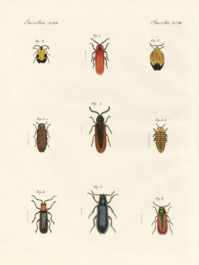 Strange Beetles--Giclee Print