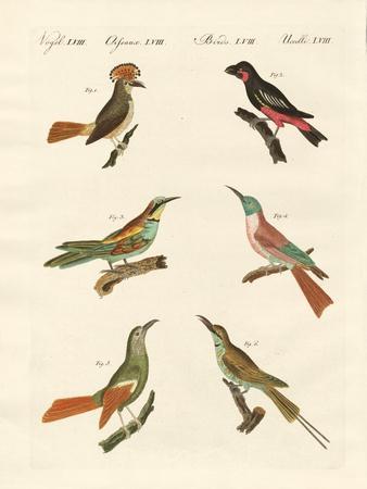 Strange Birds--Giclee Print