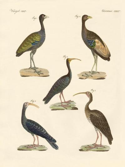 Strange Brasilian Birds--Giclee Print
