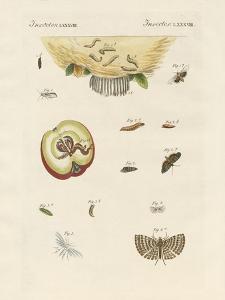 Strange Butterflies
