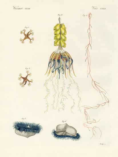 Strange Comb Jellies--Giclee Print