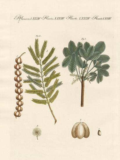 Strange Commercial Plants--Giclee Print