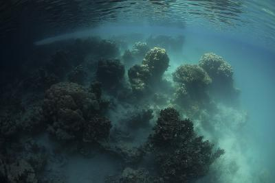 Strange Coral Growth in a Lake in Palau-Stocktrek Images-Photographic Print