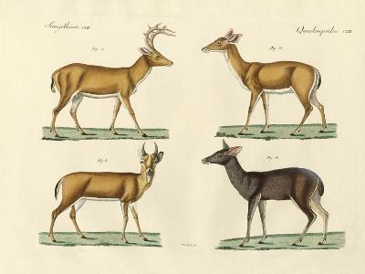 Strange Deers--Giclee Print