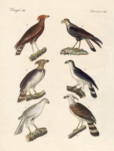 Strange Eagles--Giclee Print