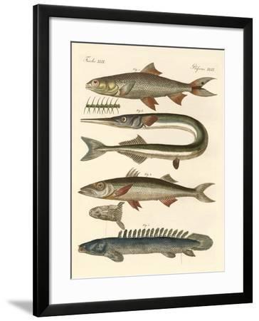 Strange Fish--Framed Giclee Print