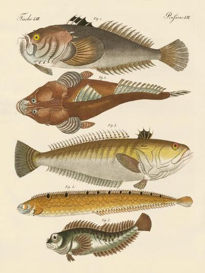 Strange Fish--Giclee Print