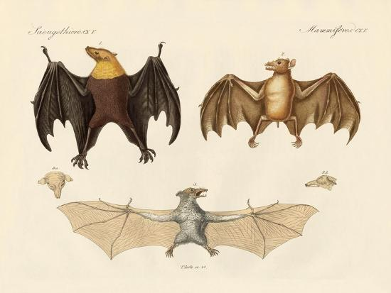 Strange Flap Animals--Giclee Print