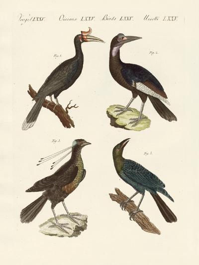 Strange Foreign Birds--Giclee Print