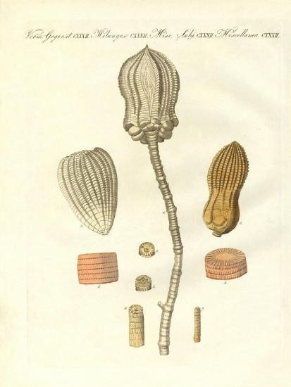Strange Fossilizations--Giclee Print