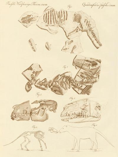 Strange Fossils of Four-Footed Animals--Giclee Print