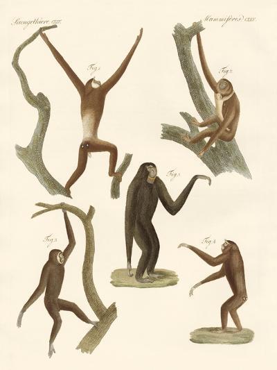Strange Gibbons--Giclee Print