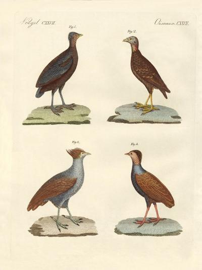 Strange Hen-Like Birks--Giclee Print