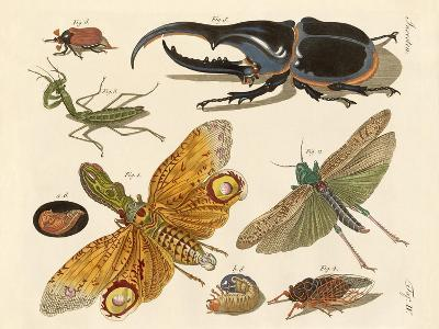 Strange Insects--Giclee Print