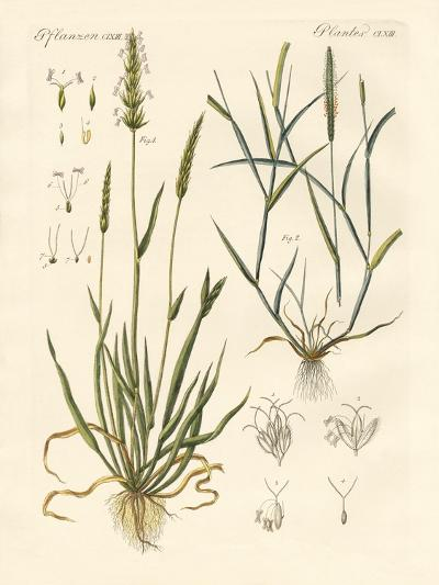 Strange Kinds of Herbage--Giclee Print