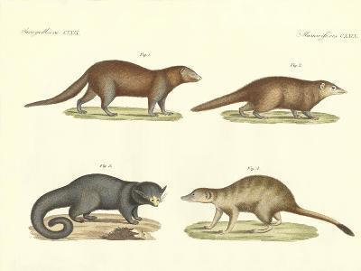 Strange Mammals--Giclee Print