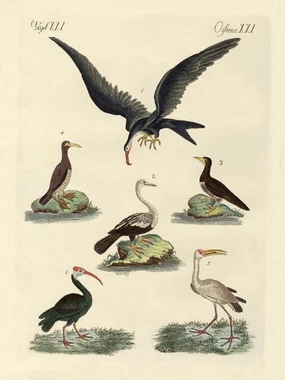 Strange Marsh-Birds and Waterbirds--Giclee Print