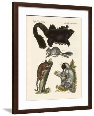 Strange Marsupials--Framed Giclee Print