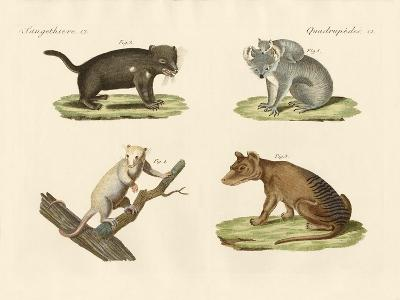 Strange Marsupials--Giclee Print