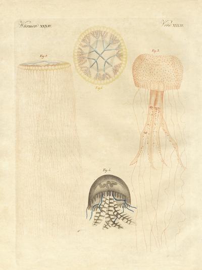 Strange Medusas--Giclee Print