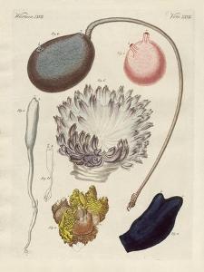 Strange Molluscs