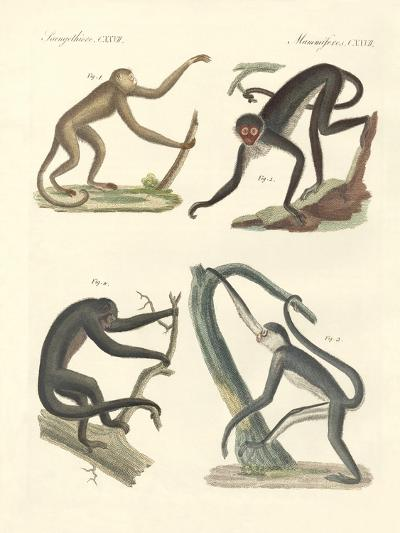 Strange Monkeys of the New Continent--Giclee Print