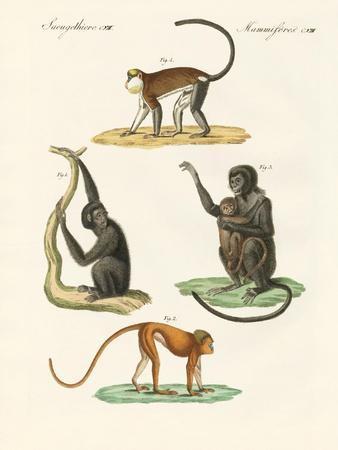 Strange Monkeys--Giclee Print