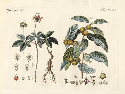 Strange Plants--Giclee Print