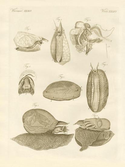 Strange Sea-Snails--Giclee Print