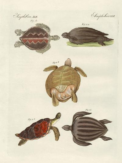 Strange Sea-Turtles--Giclee Print