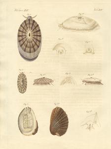 Strange Snails