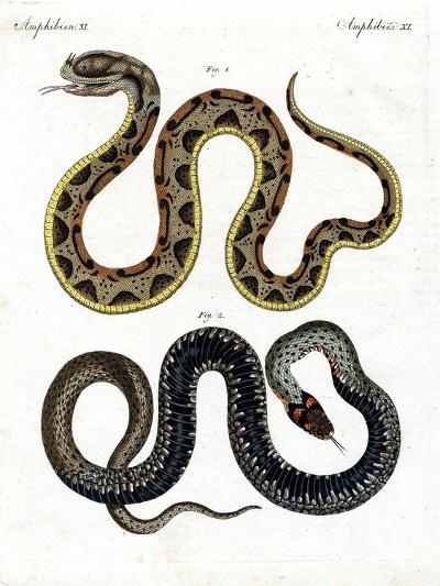 Strange Snake--Giclee Print