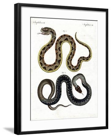 Strange Snake--Framed Giclee Print
