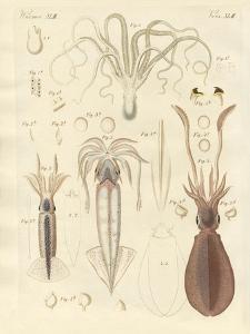 Strange Soft-Worms